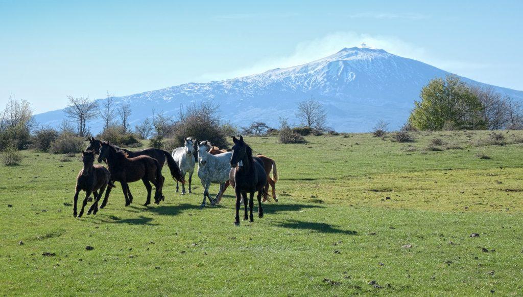 Wilde paarden in Parco dei Nebrodi
