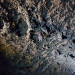 Pipistrello dentro la grotta Cicirello