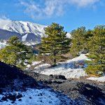 monti sartorius inverno piano provenzana
